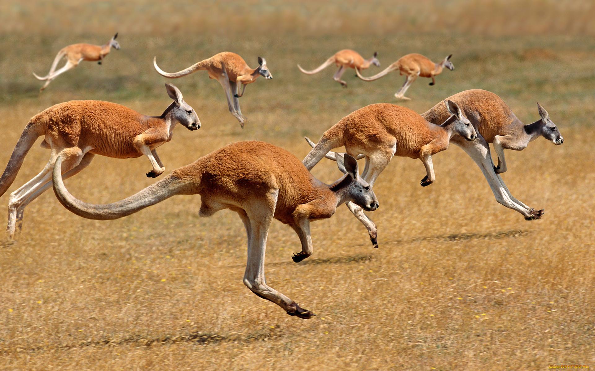 зависимости животные живущие в австралии картинки поиска